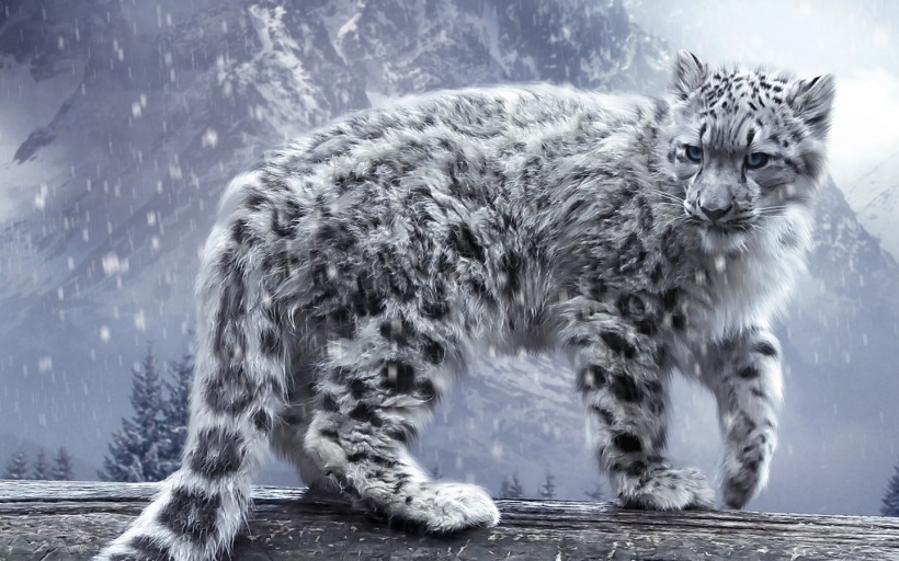 snow-leopard-nature-life-extreme-photography-true-endangered-species-fact-11